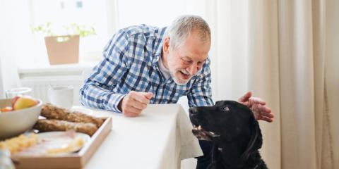 Should My Older Dog Eat Special Pet Food?, Manhattan, New York