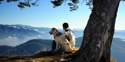 5 Etiquette Tips When Staying in a Pet-Friendly Cabin, Gatlinburg, Tennessee