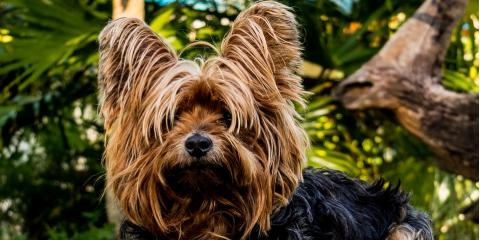 Why nyc pet friendly hotel is the perfect vacation for Dog friendly hotel nyc