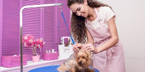 4 Specialty Dog Services Your Pet Groomer Can Provide, Fairbanks North Star, Alaska