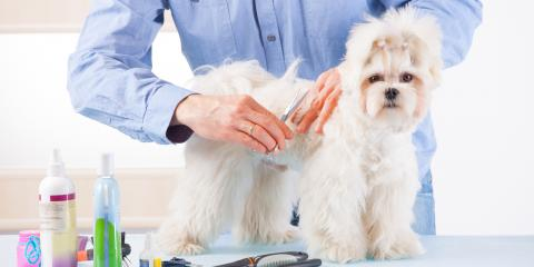 How Pet Grooming Can Boost Your Dog's Health, Nicholasville, Kentucky