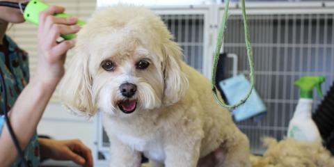 Top 3 Health Benefits of Pet Grooming, Avon, Ohio