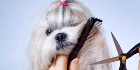 How Often Should You Take Your Dog for Pet Grooming Services?, Keaau, Hawaii