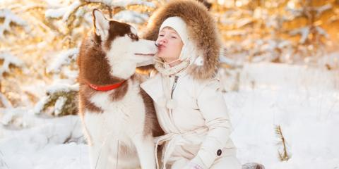 "4 Pet Grooming Tips for ""Winterizing"" Your Pet's Coat This Fall, Miami, Ohio"