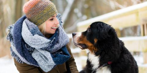 3 Tips for Protecting Your Dog's Paws This Winter, Golden Valley, Minnesota
