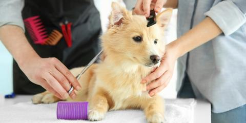 4 Ways to Get Your Puppy to Like the Groomer, Jefferson, Ohio
