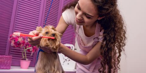 How Regular Pet Grooming Keeps Dogs Healthy, Nicholasville, Kentucky