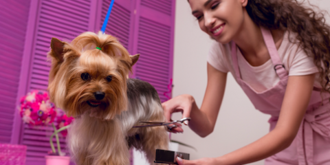 Preparing for Your Puppy's First Pet Grooming Appointment, Sanford, North Carolina