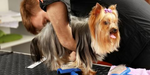 Pet Grooming Specialist: Top Tips to Keep Your Dog Relaxed During Nail Trimming, Prairie du Chien, Wisconsin