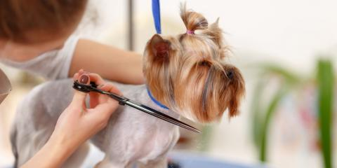 Everything You Need to Know About Cat & Dog Grooming, Elk Grove, California
