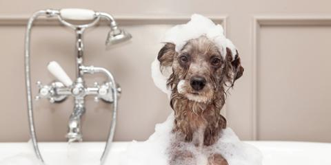 3 Reasons to Hire a Professional Dog Groomer, Philadelphia, PA, Delaware