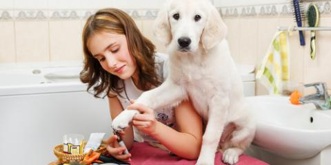 4 Helpful Pet Grooming Tips for Clipping Your Dog's Nails, Statesboro, Georgia