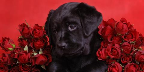 How to Protect Your Pet This Valentine's Day , Hilton, New York