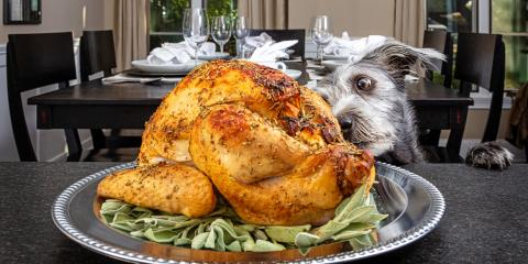 5 Thanksgiving Foods Your Pet Should Never Eat, Hilton, New York
