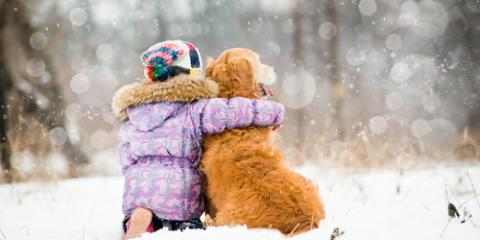 Pet Health Experts Share 5 Winter Dangers to Avoid, Hilton, New York