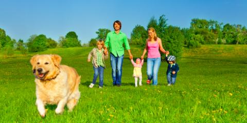 Monroe County Veterinarian Provides 5 Pet Health Tips, Hilton, New York