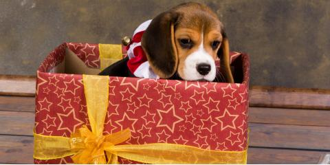 Should You Gift a Pet? 3 Factors to Consider, Honolulu, Hawaii