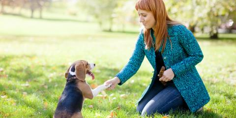 3 Easy Commands to Teach Your Dog, Newport-Fort Thomas, Kentucky