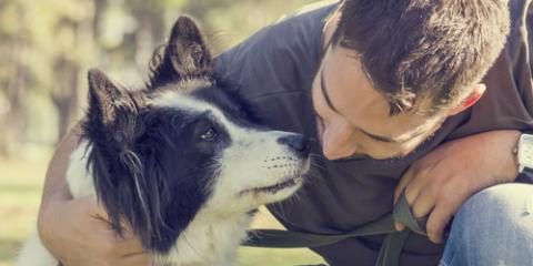 Pet Hospital Shares the Benefits of HomeAgain® Pet Microchip Implants, Fairport, New York