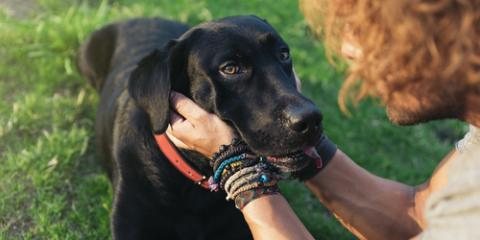 Why Your Furry Friend Should Visit a Pet Hospital for Preventive Care, Sanford, North Carolina