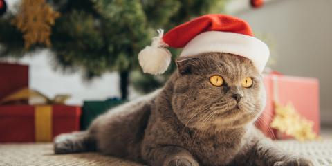 How to Cat-Proof Your Christmas Tree, Southgate, Kentucky