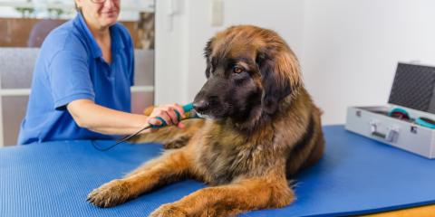 What Are the Benefits of Pet Laser Therapy & What Can It Treat?, Gulf Shores, Alabama