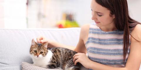 A Complete Guide to Cat Veterinary Visits, Sanford, North Carolina