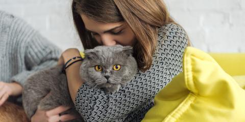 4 FAQ About Pet Memorial Services, Springfield, Ohio