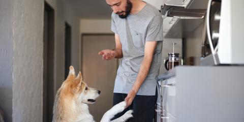 3 Treats to Never Give Your Dog, ,