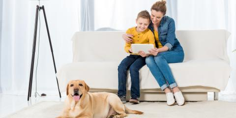 5 Tips to Get Rid of Pet Odors in Your Home, Anchorage, Alaska