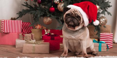 4 Christmas Gift Ideas for Your Dog, Ewa, Hawaii