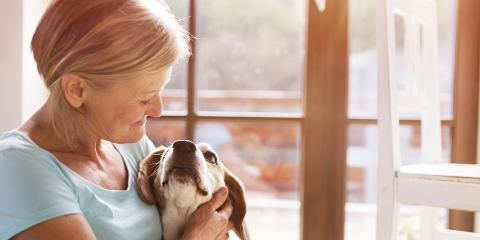 How to Prepare Your Home for a Pet Sitter , Alexandria, Virginia