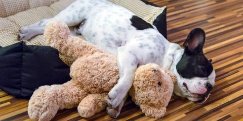 How Hiring a Pet Sitter Will Help Your Puppy or Kitten Rest Easy, Anchorage, Alaska