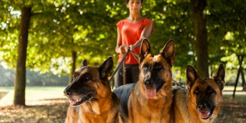 3 Helpful Tips to Prepare for the Pet Sitter, Sunrise, Florida