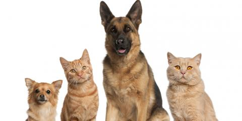 9 Questions to Ask a Potential Pet Sitter, Sunrise, Florida