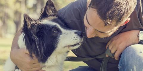 3 Most Common Pet Skin Problems, Lillian, Alabama