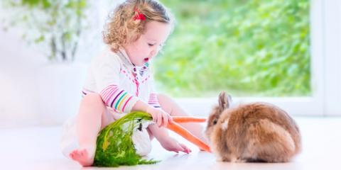 The Best Diet to Keep Your Rabbit Healthy, Bethel, Ohio