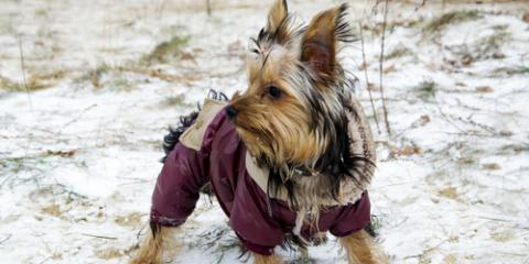 Pet Supply Store Offers a Guide to Winter Wear for Dogs , Bethel, Ohio