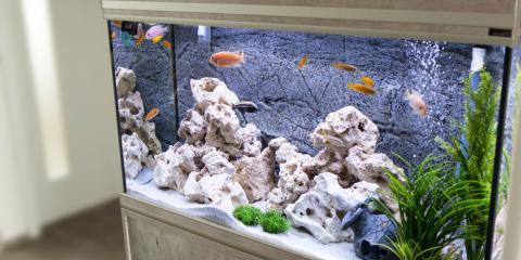 How to Stock Your Home Aquarium, Bethel, Ohio