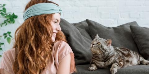3 Common Cat Behaviors, Translated, Conyers, Georgia