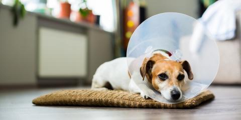 What Are the Best Ways to Help an Animal Heal After Pet Surgery?, Kabletown, West Virginia