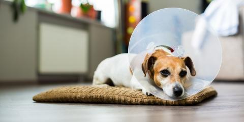 5 Tips to Help Your Pet Recovery After Surgery, Springfield, Ohio