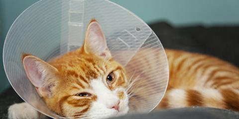 5 Tips for a Smooth Recovery From Pet Surgery at Home, Honolulu, Hawaii