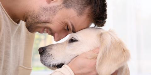 3 Ways to Memorialize a Beloved Pet, Bolivar, Missouri