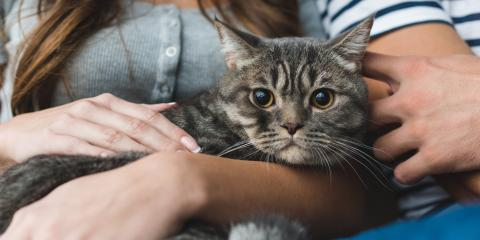 Do Indoor Cats Need the Rabies Vaccine?, Stratford, Connecticut
