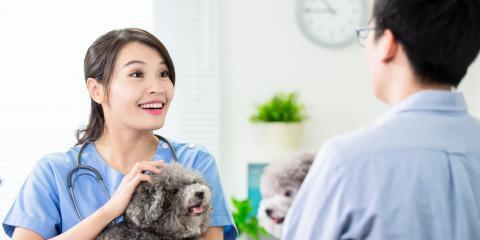 4 FAQ About Pet Vaccines, Honolulu, Hawaii