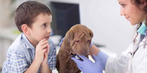 4 Pet Vaccines That Protect Your Dog, Mount Washington, Kentucky