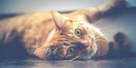 3 Easy Ways to Make a Visit to the Vet Hospital Less Stressful for Your Pet, Avon, Ohio