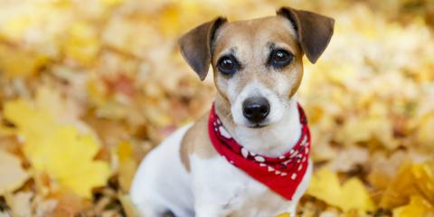 5 Useful Tips to Keep Your Pet Healthy This Fall, Springfield, Ohio