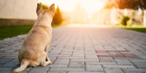 5 Ways to Promote Pet Wellness as Your Dog Ages  , Amsterdam, Virginia